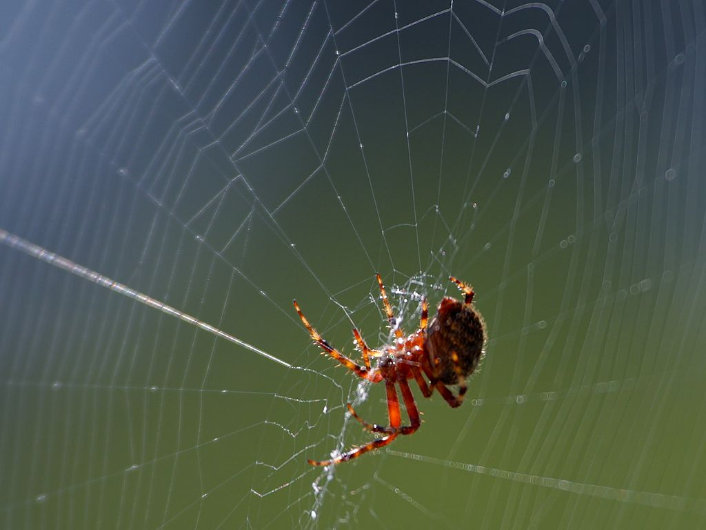 spider web | Retreat to the Mountains