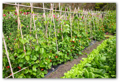 Vegetable Garden Ideas For Beginners gardens for beginners. best low maintenance container gardens for